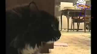 Безумные крики животных Смотреть всем,угар