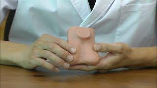 睾丸の触診練習用モデル,病的な兆候を触知できます│L60