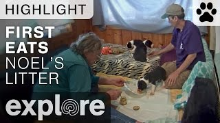 Noel's Snail Litter's First Baby Food - Service Dog Project Live Cam Highlight thumbnail