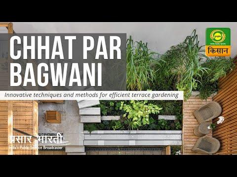छत पर बागवानी: फूलों को सूखाकर कैसे निकालें बीज | Chhat Par Bagwani