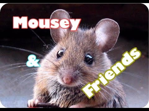 Mousey & Friends Escape Hospital - Children's Bedtime Story/Meditation