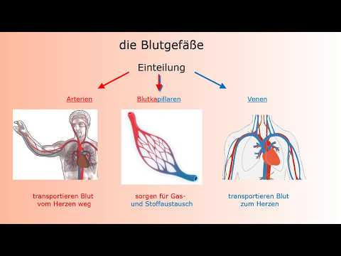 Deutschkurs Für Pflegeberufe - Herz-Kreislauf-System/ German Course For Nurses - Circulatory System