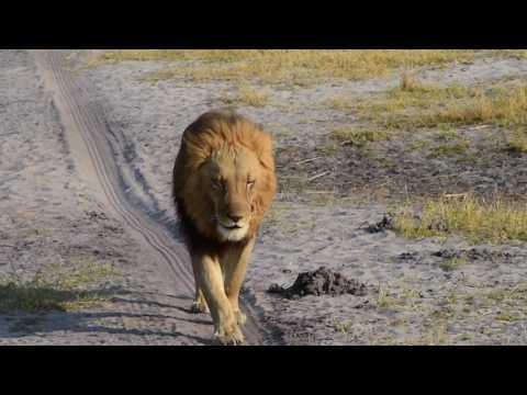 Botswana Safari 2016