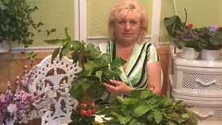 Диабет- листья грецкого ореха!!!  Не пропусти это время !!!