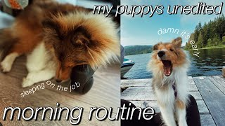 my 7 month old puppy's morning routine (unedited)   sheltie puppy's morning routine