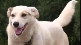 Приют для собак в д  Веретье