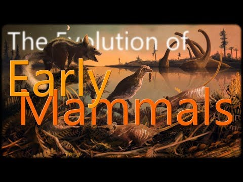 The Evolution Of Early Mammals