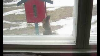 Problems In Birdfeeder, Squirrel