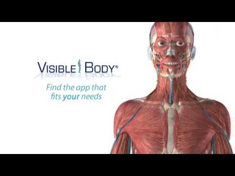 Visible Body\'s 3D Anatomy Suite | Choose the app that best fits your ...