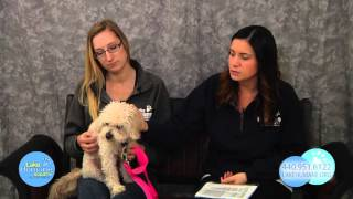 Adopt A Pet - January 2016 Featured Pets