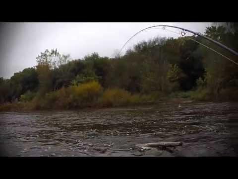 Milwaukee River Salmon Run 2014