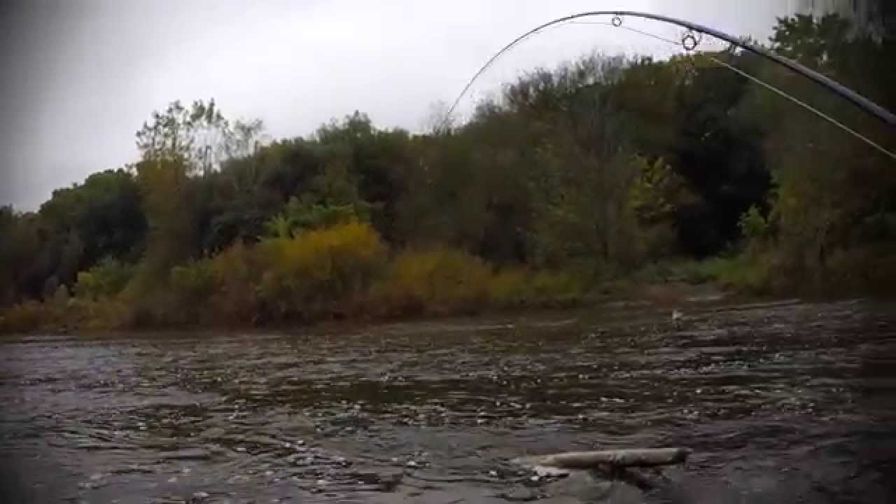 Milwaukee river salmon run 2014 youtube for Milwaukee river fishing report