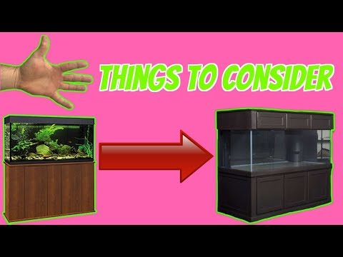 UPGRADING TO A LARGER AQUARIUM ? 5 Things You Must Consider Before Purchasing A Big Fish Tank