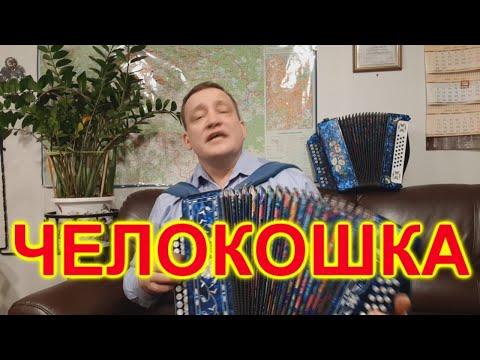 ЧЕЛОКОШКА