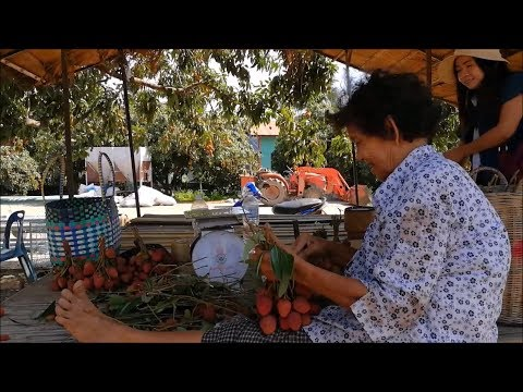 Amazing fruit of Lychee farming in thailand - Asian food