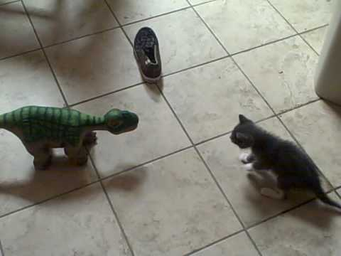 Thumbnail for Cat Video Surprised Kitty vs. Pleo the robot dinosaur!