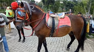 Naik Kuda Dan Becak Mini Di Tandon Ciater