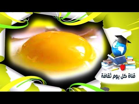 هل البيض مفيد ؟ ام بياض البيض فقط ! حقائق خطيره عن صفار البيض وتأثيرة على القلب والشراين