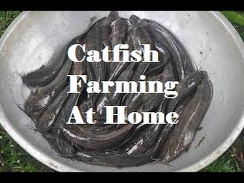 how to start fish farming at home