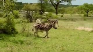 Поразительный Документальный фильм BBC о природе и животных дикой Африки [BBC на русском]
