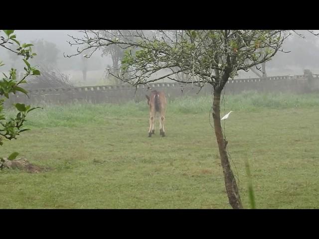 Desayuno en la niebla / Breakfast in the mist