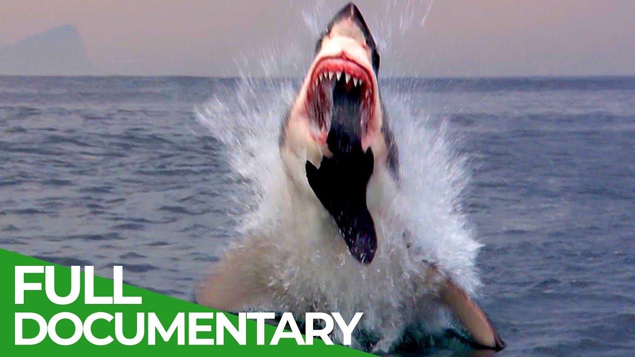 Shark Business | Blue Realm | Free Documentary Nature