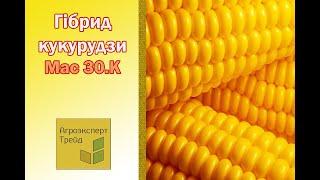 Кукуруза Мас 30 К  🌽 - описание гибрида 🌽, семена в Украине
