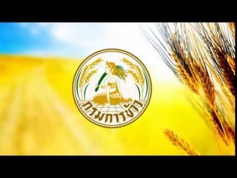 Present กรมการข้าว-กระทรวงเกษตรฯการทำนาเปียกสลับแห้ง