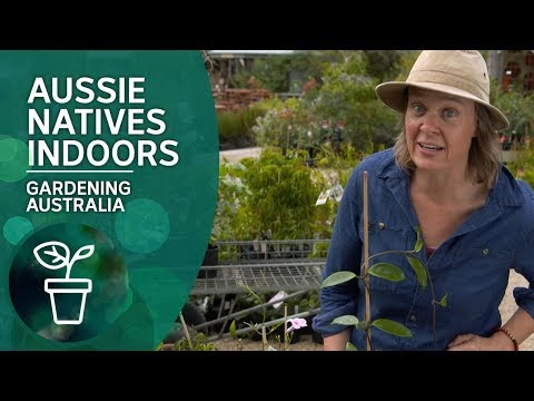 Grow Aussie Natives Indoors: Varieties, Tips And Tricks