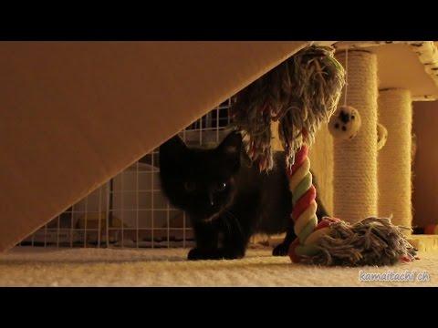 【瀬戸の黒猫クロ日記】【Kuro diary of seto】 保護した野良猫の成長を記録している動画日記です。 It is a video diary that records the gro...