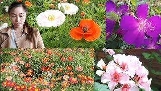 LÀNG HOA VẠN THÀNH - Thiên đường Hoa nổi tiếng nhất ở Đà Lạt