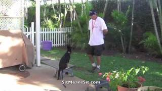 Sit Means Sit Hawaii German Shepherd Puppy Training Day # 7