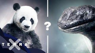 Rettung nur für süße Tiere! – Ist Artenschutz ungerecht?