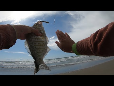 Surfperch Fishing | FISH FRY | Central Coast Of California