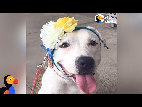 Rescued Dog Gets Hats From Around The World To Cover Her Abuse Scars | The Dodo