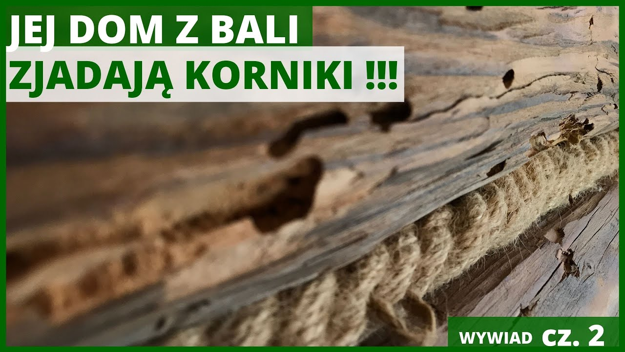 Download Jej Dom z Bali Zjadają Korniki 🦗!!!