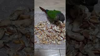 코뉴어앵무새를 키우면 생기는 일 2
