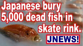 5,000 dead fish buried in skate rink - JNEWS!