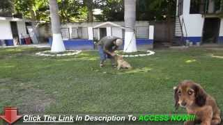 Dog House Training Can Be Simple