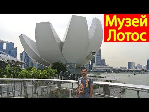 Музей искусства и науки в Сингапуре #707