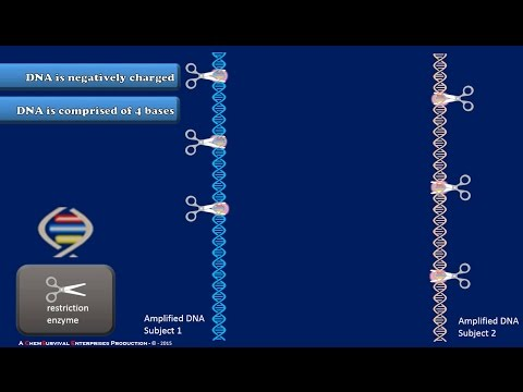 A Brief Explanation of DNA Fingerprinting
