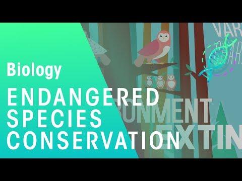 Endangered Species | Environment & Ecology | Biology | FuseSchool