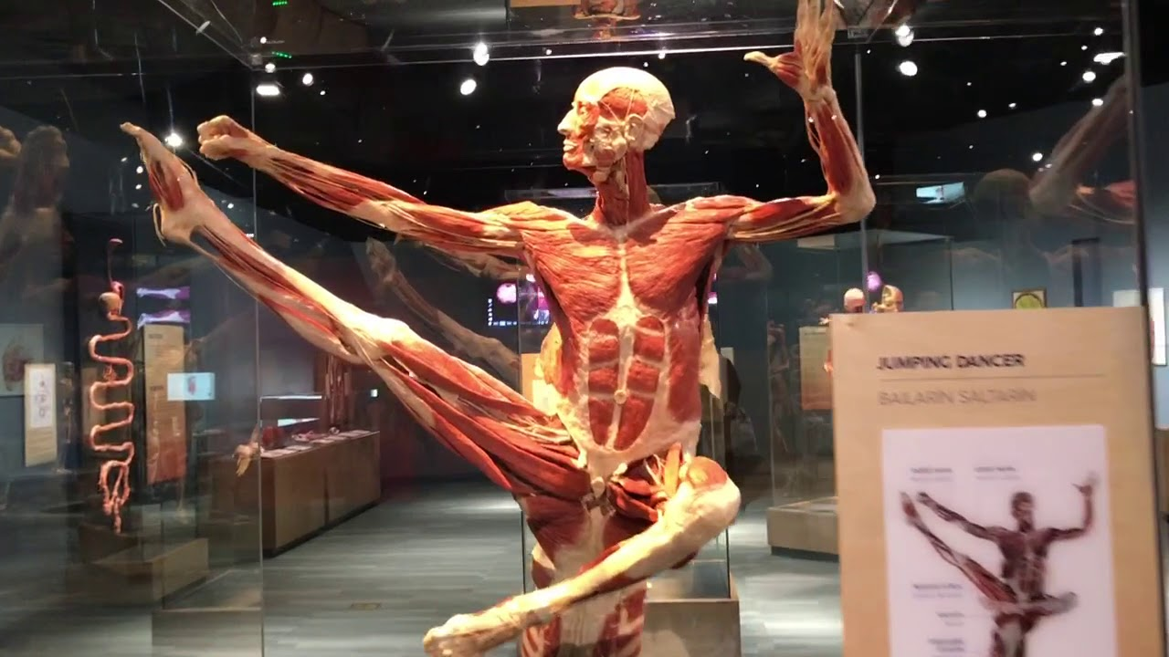 Amazing Body Works Exhibit At Tech Museum In San Jose Youtube