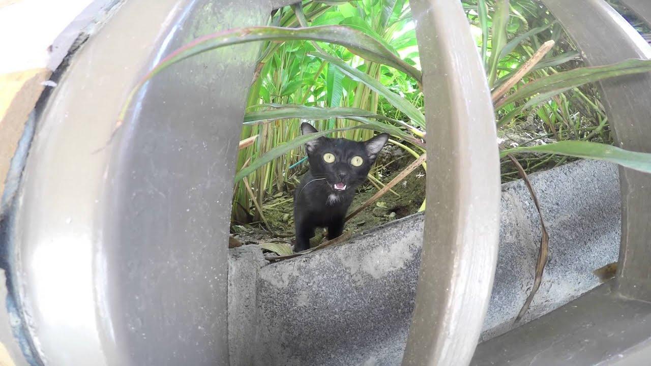 Crazy Thai Cat - Chanalai Garden Resort - GoPro CatHD - YouTube