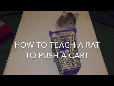 How to Train a Rat to Push a Shopping Cart