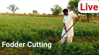 Fooder Cutting For Animals