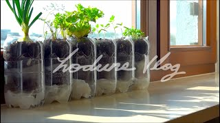 Home Gardening l Self Watering System for Plants using Plastic Bottle