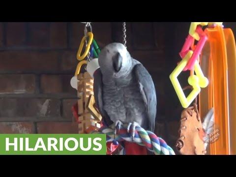 Impolite parrot makes slurping sounds