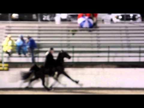 """BIG LICK"" ""GULF COAST CHARITY HORSE SHOW"" AT COLUMBIA, TENNESSEE ON APRIL 24, 2015"