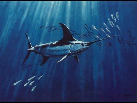 Atlantico Aguas De Senegal Pesca De Pez Espada Youtube